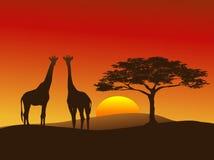 silhouette för 2 giraff Arkivfoto