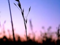 silhouette för 3 växt Royaltyfri Bild