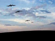 silhouette för fågel s royaltyfri fotografi