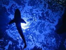 silhouette för fisk s Royaltyfri Foto