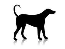 silhouette för svart hund Royaltyfri Bild
