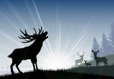 Silhouette of a family deer standing on the time of morning Stock Photography