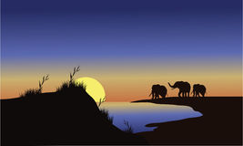 Silhouette family elephants at the sunset Stock Photography
