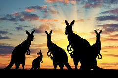 Silhouette family of kangaroos Royalty Free Stock Image