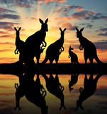Silhouette family of kangaroos Royalty Free Stock Photography