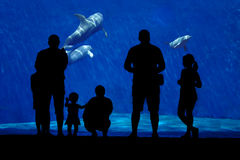 Silhouette of a family watching dolphin. Royalty Free Stock Photography