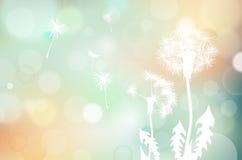 Silhouette fanée de pissenlits et fond brouillé Photographie stock libre de droits