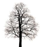 Silhouette of fantastic tree Royalty Free Stock Images