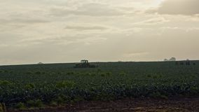 Silhouette of farm workers during early morning broccoli harvest in a field