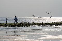 Silhouette from father with child feeding the birds. Texel Royalty Free Stock Photo