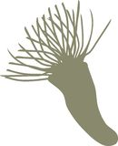 Silhouette of feather duster worm Royalty Free Stock Photography