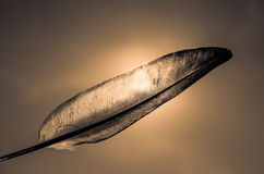 silhouette feather Royalty Free Stock Image