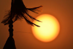 Silhouette of feather with sunset. On the background stock photo