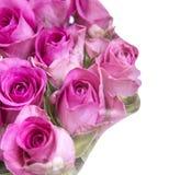 Silhouette femelle des roses Images libres de droits