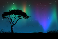 Silhouette field with aurora sky at night Stock Images