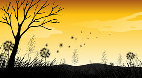 Silhouette Field. With grass and dry tree Royalty Free Stock Images