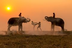 Silhouette fighter tradition Thai boxing or Muay-Thai outdoor. Battle with mahout and elephants, Ancient fighter on the world sport of Thai and around Stock Images