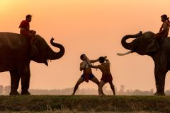 Silhouette fighter tradition Thai boxing or Muay-Thai outdoor. Battle with mahout and elephants, Ancient fighter on the world sport of Thai and around Stock Photos