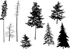 Silhouette fir set. Illustration with fir set isolated on white background Stock Photo