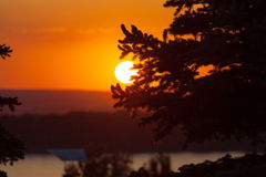 Silhouette of fir tree with sunset Stock Photos