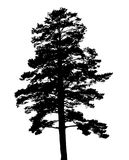 Silhouette of fir tree. Template for business card, banner, poster, notebook, invitatio. N. Vector illustration for your design Stock Photo