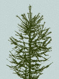 Silhouette of a fir tree. Vector image of the branches of a deciduous tree in cold season Royalty Free Stock Photos