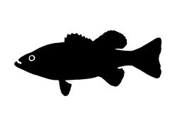 Silhouette of the fish Bass. The silhouette of fish predators Bass freshwater fish that lives in clear lakes and rivers Stock Image