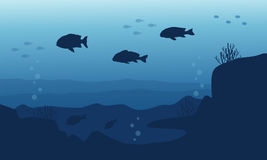 Silhouette of fish on blue sea background landscape. Vector Stock Photography