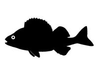 Silhouette of the fish Perch. The silhouette of fish predators Perch freshwater fish that lives in clear lakes and rivers Stock Photos