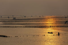 Silhouette of fisherman at oyster farm on sunrise background in Bang Taboon, Thailand Royalty Free Stock Photography