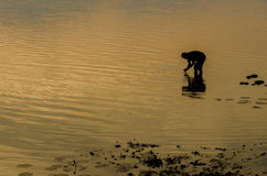 Silhouette of a fisherman in the river at sunset. The silhouette of a fisherman in the river at sunset Royalty Free Stock Photo