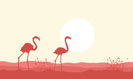 Silhouette of flamingo beauty landscape Royalty Free Stock Photo