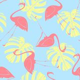 Flamingo random on blue background. Royalty Free Stock Image