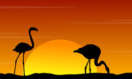 Silhouette of flamingo at sunset beauty landscape Stock Image