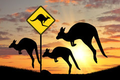 Silhouette of a flock of kangaroos Stock Images