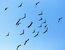 Silhouette of a flock of pigeons on blue sky Royalty Free Stock Photo