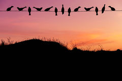 Silhouette flock sparrows perching on power line in sunset stock images