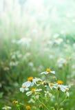 Silhouette flower blade of grass field sunlight rim light Royalty Free Stock Image