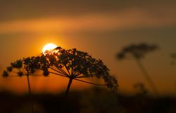 Silhouette of Flower during Sunset Stock Image