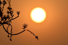 Silhouette of a flower at sunset. Silhouette of a flower branches and leaves at sunset Stock Photos