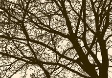 Silhouette of a flowering tree in spring Royalty Free Stock Photos