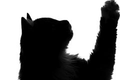 Silhouette fluffy cat. Ask to eat Stock Image