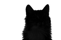 Silhouette of fluffy cat on a white background Royalty Free Stock Photography