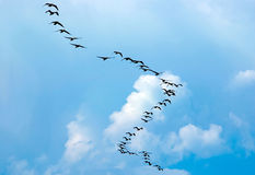 Silhouette of flying birds. On blue sky background Royalty Free Stock Image