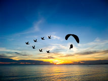 Silhouette flying birds and paramotor over sea sunset sky Stock Photos