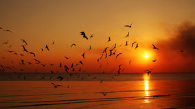 Silhouette flying birds. Seagulls are flying in the sky while the sun is rising.Bangpoo ,Thailand Stock Photos