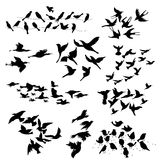 Silhouette of Flying Birds Stock Photos