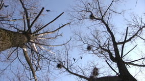 Silhouette of flying crows stock video footage