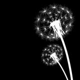 Silhouette with flying dandelion buds Stock Images