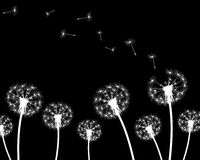 Silhouette with flying dandelion buds Royalty Free Stock Photo